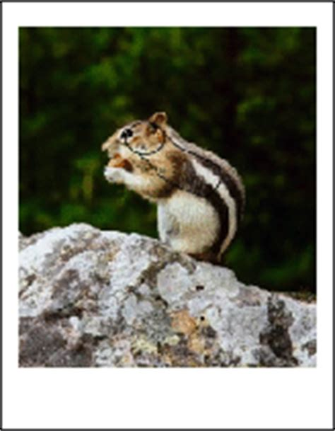 printable chipmunk targets chipmunk targets pictures to pin on pinterest pinsdaddy