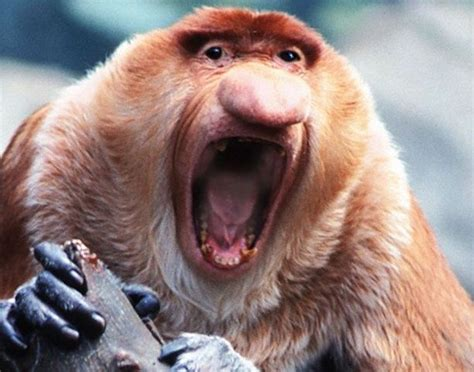 imagenes de animales feos im 225 genes de animales feos