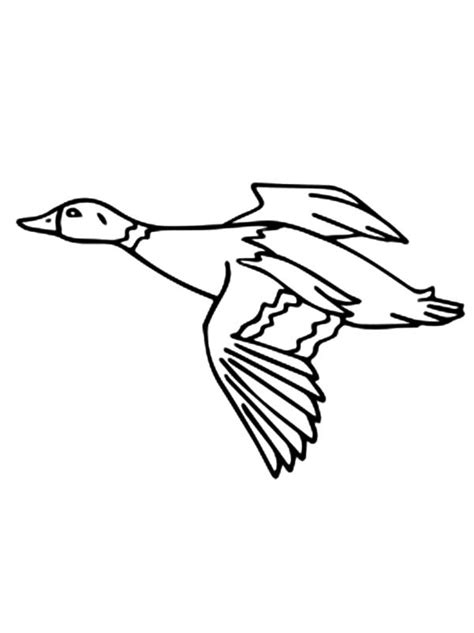 migratory birds coloring pages migratory bird pages coloring pages coloring pages of