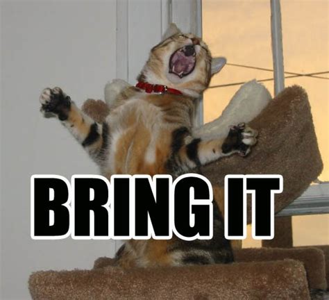 Bring It On Meme - bring it on cat macros