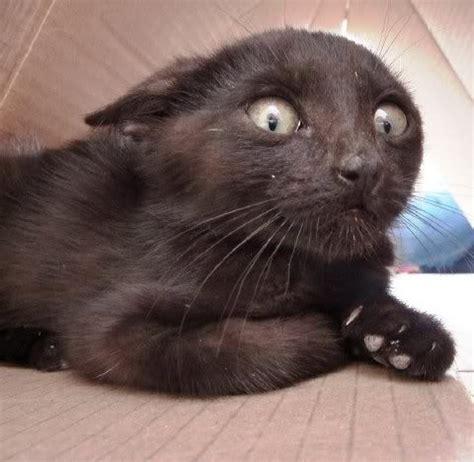 imagenes de animales graciosos gato asustado gatos pinterest
