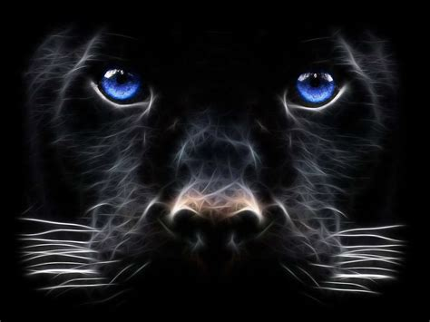 kitten wallpaper for windows 7 backgrounds windows 7 black panther big cat de as43ver