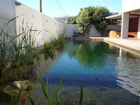 living pool christchurch natural pools nz