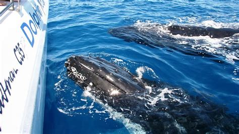 boat parts hervey bay queensland tourists mugged by whales in hervey bay