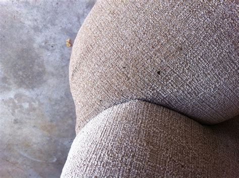 mouse droppings on couch bamboozled mouse poop probably isn t covered by your