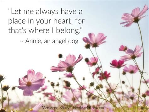 comforting words for loss of pet 410 best pet loss images on pinterest loss of pet