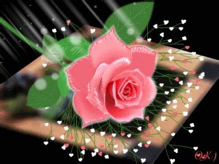 Wallpaper Gif Flower | download animated 320x240 171 pink rose 187 cell phone wallpaper