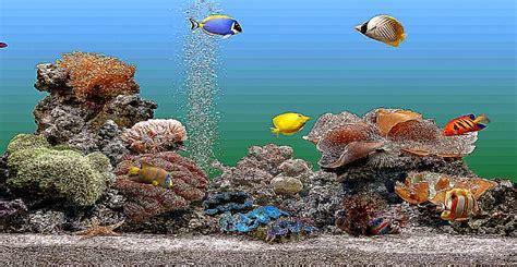 best fish screensaver aquarium screensaver windows 8 best free hd wallpaper