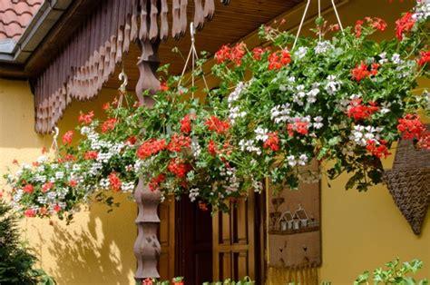 Lipstik Qu Putih tips memberikan kesejukan rumah dengan tanaman hias gantung