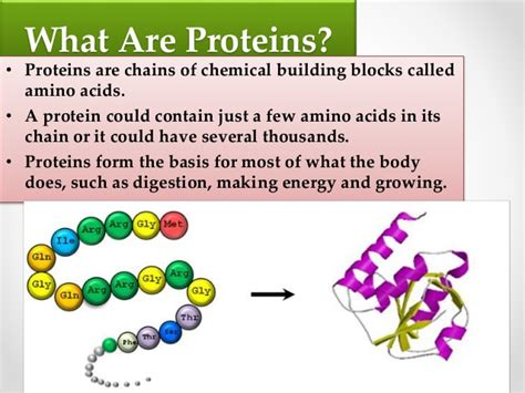 What Does Much Protein Do High Protein Foods For Better Health Health Fundaa