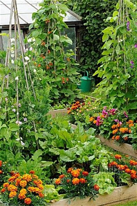 Summer Garden With Mixed Vegetables And Flowers In Raised Flower And Vegetable Garden