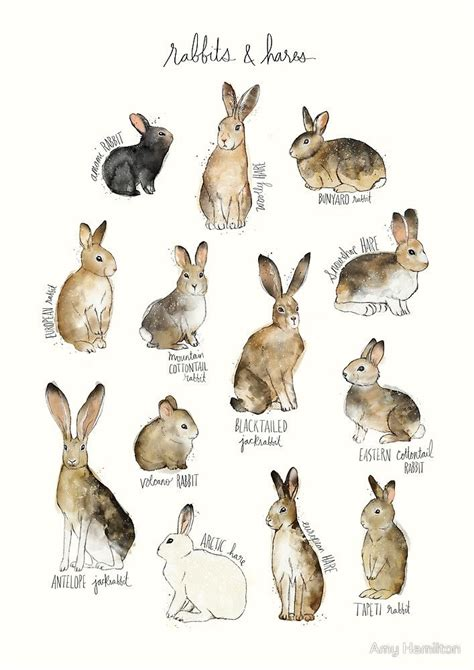 watercolor tattoos hamilton watercolor rabbits hares by hamilton