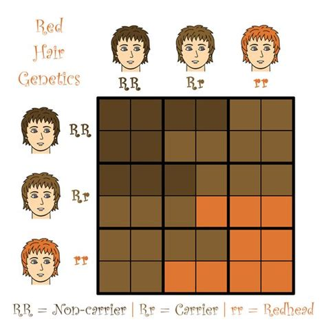genetics of hair color gene expression blonde or brown hair dominant pokemon go search for
