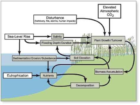 usgs circular  chapter  factors affecting coastal wetland loss  restoration