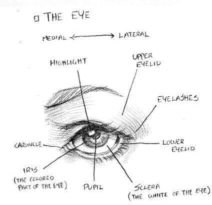 how to draw eye diagram crunchyroll groups anime fanart