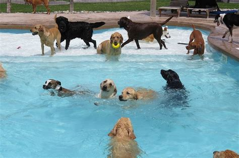 puppies in pool a pool pawty at a daycare center is the funniest thing a puppy can wish for