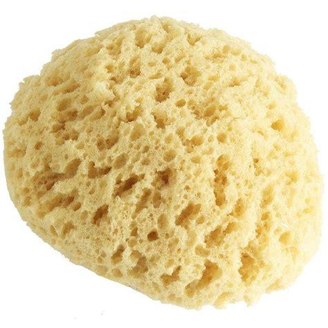 sea sponge on natural hair sea sponge on natural hair nycupcake s musings 187 blog