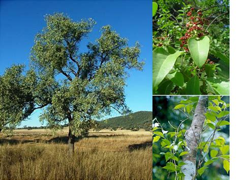 Gaharu Cendana Jawa biologi edutainment bab iv pelestarian hewan dan tumbuhan