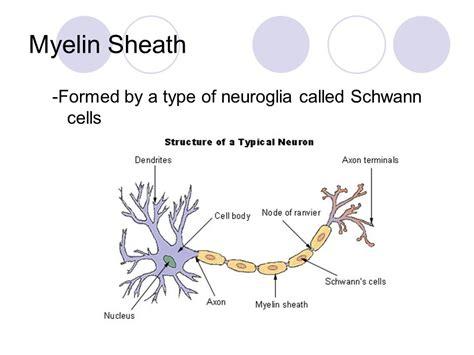 nerve cells the neuron ppt