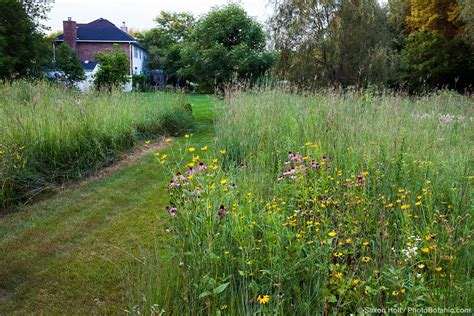 Prairie Lawn And Garden by Better Than Lawn Photobotanic