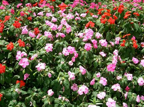 crabapple landscapexperts annual color beds for shady properties