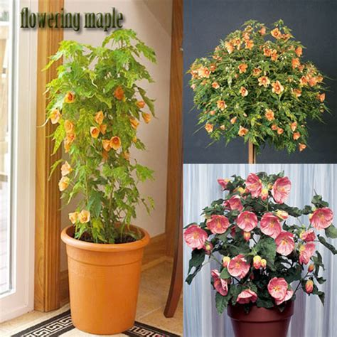 Home Decor With Indoor Plants 3 Easy To Grow Indoor Flowering Plants For Your Home Decor Indoor Plants For Home Decoration