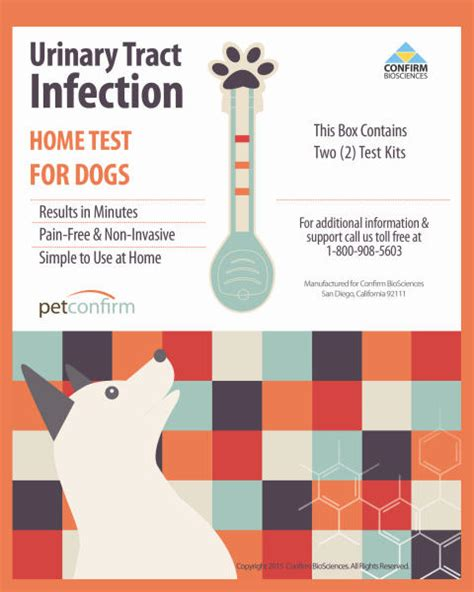 urinary tract infection in dogs dogs urinary tract infections kidney disease other urinary