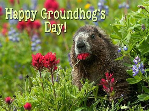 groundhog day happy day happy groundhog s day