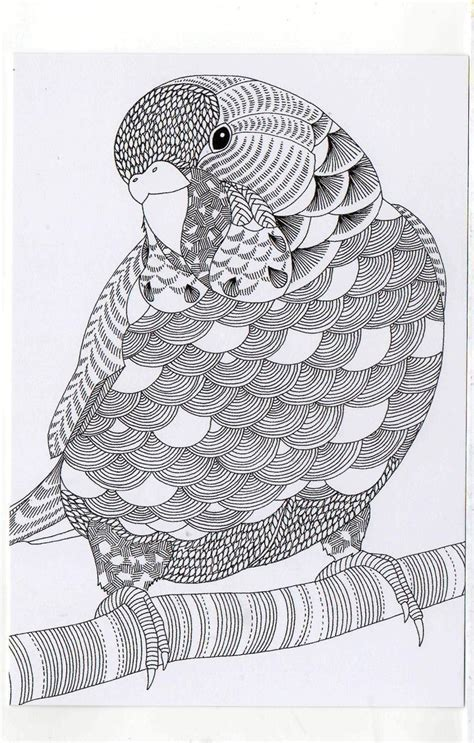 Parrot Coloring Book