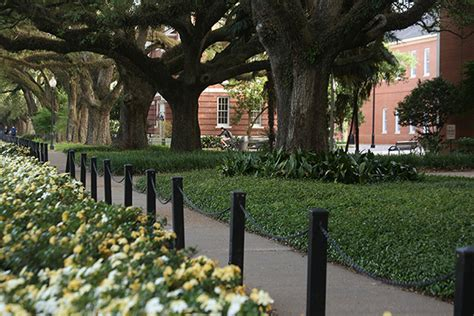 Of Louisiana Lafayette Mba by Retains Tree Cus Usa Title Of