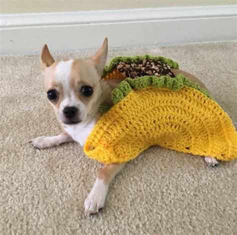 taco puppy taco pet costume taco cat costume taco costume for by aegeandrawn