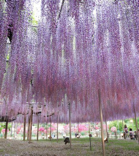 monde möbel blogues 194 187 l un des plus bel arbre du monde 194 187 ma plan 232 te
