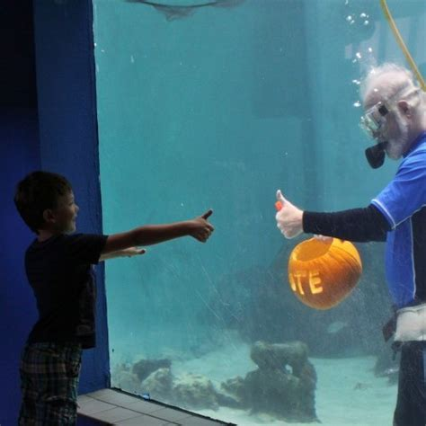 mote president carves pumpkin underwater to prepare for mote s of fish fright
