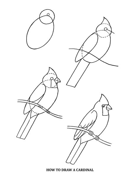 pattern drawing bird cardinal images google search coloring page patterns