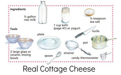 ingredients in cottage cheese probiotic cottage cheese enzyme rich the