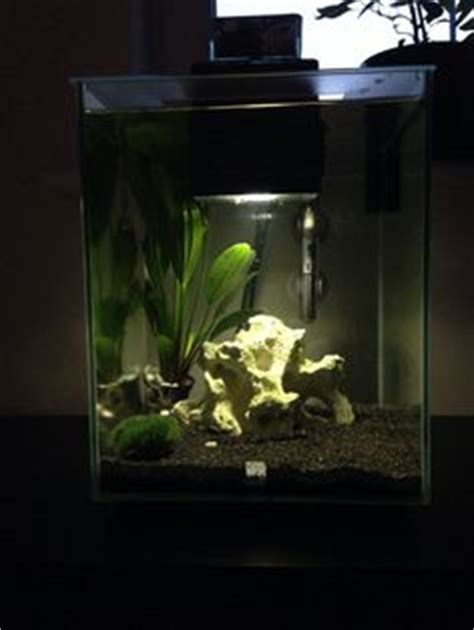 fluval chi aquascape fluval chi on pinterest marimo moss ball marimo and