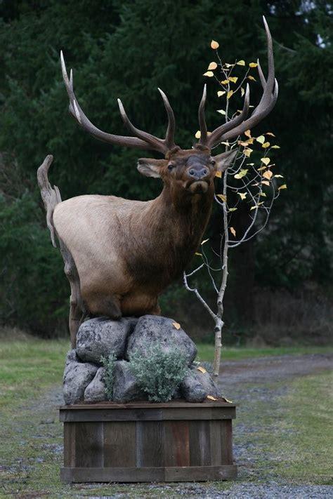 Elk Pedestal Mounts moose pedestal mount search elk mounts pedestal the o jays and moose