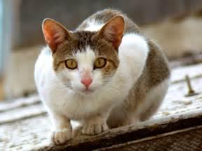 Fondos de El gato sobre el tejado | Fondos de pantalla de El gato ... Gato