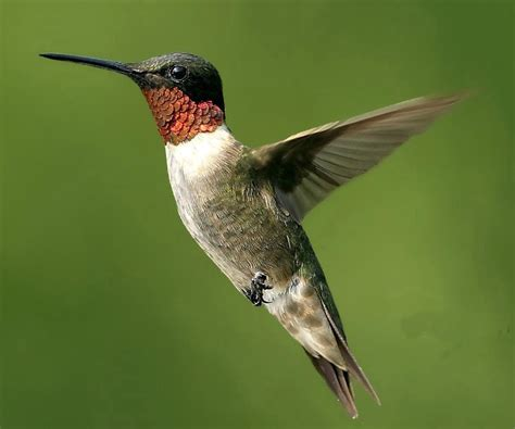 interesting facts about humming birds do you know