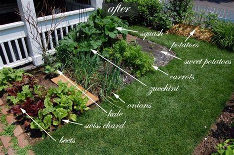 Front Yard Vegetable Garden One Month Update Gardens Front Yard Vegetable Gardens