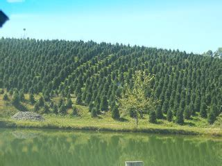 marion nc christmas tree farm little switzerland a slice of smith cing vomiting and all at the same time