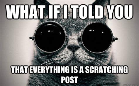 Cat Facts Meme - morpheus cat facts memes quickmeme