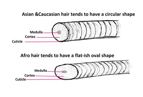 what is it about our hair diffrences between afro