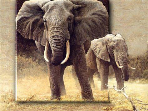 syari eleghant selebrity safari wallpapers wallpaper cave