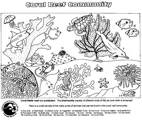 Cnidarian Coloring Page Animals Town Animals Color