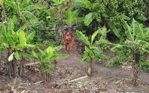 amazon tribe uncontacted indians of brazil the last ones survival