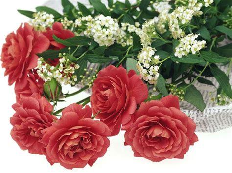 fiori s valentino fiori san valentino regalare fiori