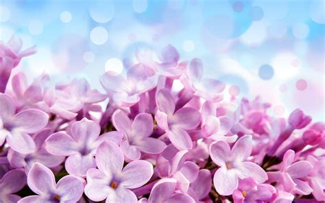 imagenes flores jpg fondos para android especial flores adnfriki