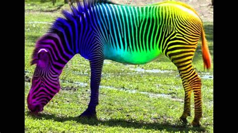 colorful animals colorful animals