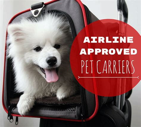 in cabin pet travel 8 best airline approved pet carriers for in cabin flights